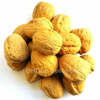 Walnuts in Shell  Natural Whole Best Quality Nuts