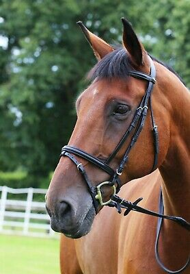 Padded Leather Bridle With Flash, Rubber Reins All Sizes Black Or Brown
