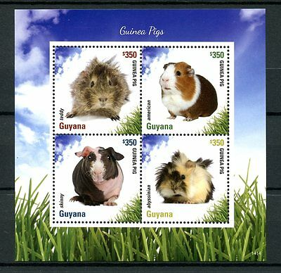 Guyana 2014 MNH Guinea Pigs 4v M/S II Pets Abyssinian Skinny Teddy Stamps