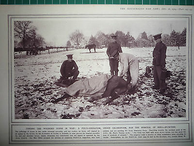 """1914 Ww1 Print. """" Tending The Wounded Horse In War """" ."""" Rare"""