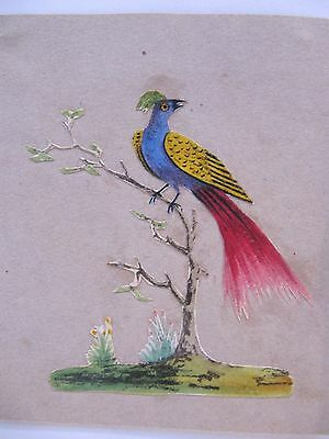 19th CENTURY, Three Cut-Out Coloured Prints, EXOTIC BIRD, SHELL & LEAVES