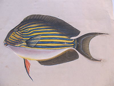 19th CENTURY, A Page from a Scrap Album, COLOURED PRINT OF FISH & Etchings verso