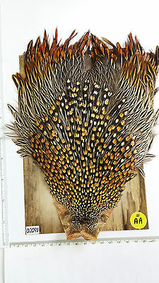 SUPER NICE # AA  JUNGLE COCK CAP # 02091 look at the photo NEW STOCK