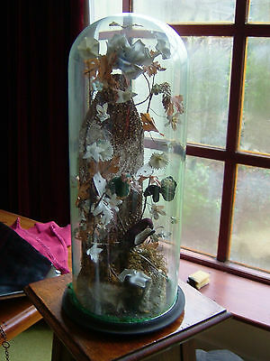 Large Antique Glass Dome and Stand