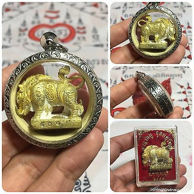 Pig Takrut Yantra Thai Buddha Amulet Luck Rich Success Wealth Protect B.E.2559