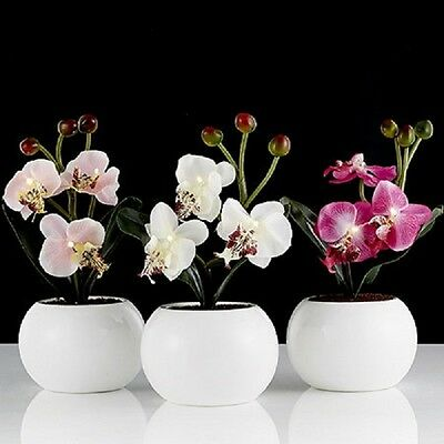 Home Reflections Set of 3 Mini Orchids in Pots with LED lights & Timer function