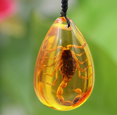 Beautiful Amber Fossil Plants Insects Characteristics Scorpion Pendant