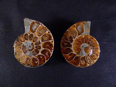 Polished Opalised Iridescent Madagascan Ammonite Fossil Pair - 40mm, 34g
