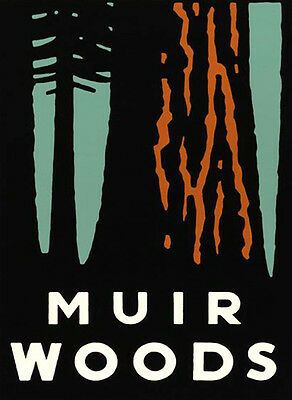3x4 inch MUIR WOODS Art Poster BUMPER STICKER - cali ca rv national park hike go