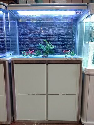 Curved Glass 80cm Fish Tank, LED light, Digital thermometer