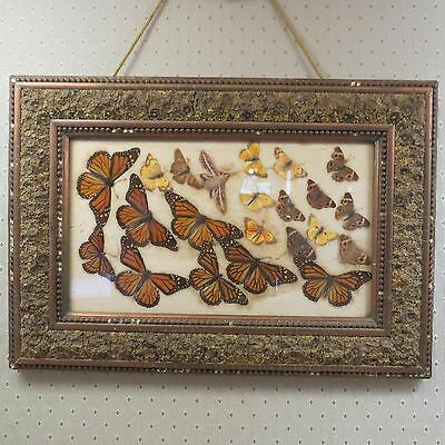 ANTIQUE VICTORIAN FRAMED BUTTERFLY/MOTH WALL ART Lepidoptera GESSO FRAME Floral