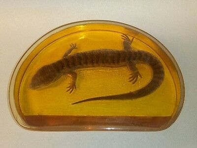 Lucite taxidermy Lizard Paper Weight ~ 1970's California Prison Art