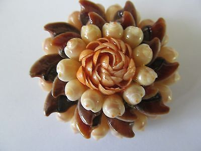 Vintage Large Round Real Diff. Shapes Of Seashells Celluloid Backing Brooch Pin