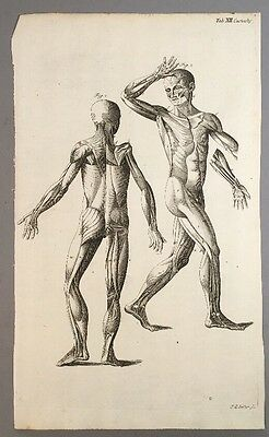Vintage Skeleton Drawing 1725 Seiller Anatomical