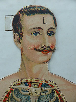 Vinton's Anatomical Medical Students Model Of The Human Body (Male)** Antique **