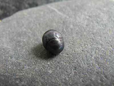 CARVED freshwater PEARL pendant beads BLACK 1 hole 12x10mm oval #1