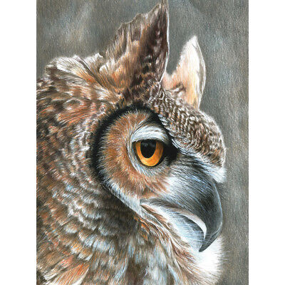 """Color Pencil By Number Kit 8.75""""X11.75"""" Sepia Owl CPBNK-19"""