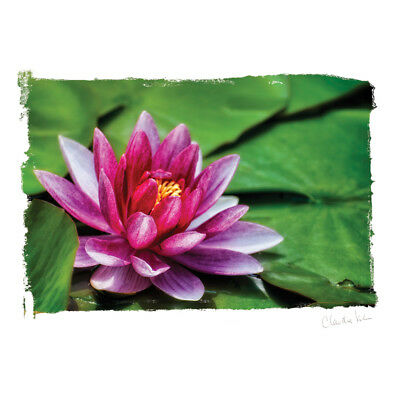 Artist Series Photo Card W/Envelope Among The Lily Pads C0006E