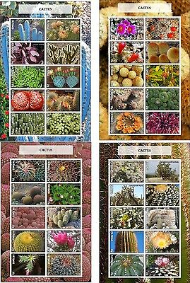 Cactus Flowers Cactuses 4  Souvenir Sheets Mnh Imperforated