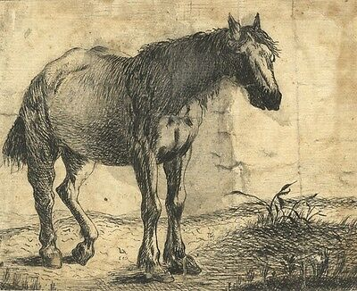 Attributed Dirk Stoop, Horse Study - Original 17th-century pen & ink drawing