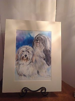 Yvonne Sovereign Limited Edition Havanese Print