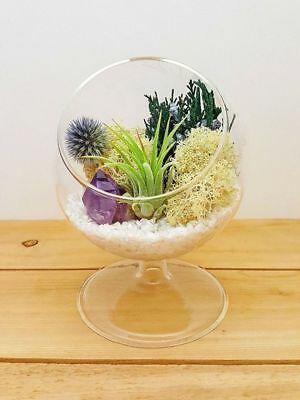 """Air Plant Terrariums / 4"""" Round Glass Pedestal / Choose From 5 Styles!"""