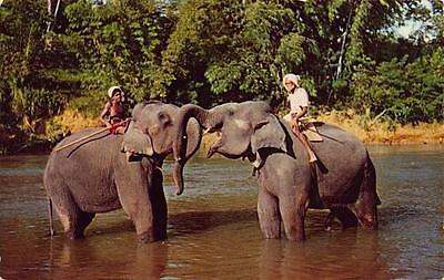 Vintage Postcard CEYLON Elephants at Play in the Mahaweli Ganga near Kandy
