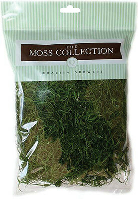 Preserved Spanish Moss 108.5 Cubic Inches Apple Green QG1542