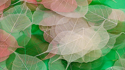 Bodhi Leaves - Coloured - Arts and Crafts