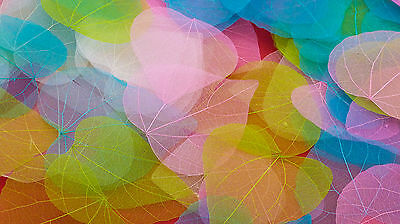 Heart Skeleton Leaves - Brightly Coloured - Arts and Crafts Materials
