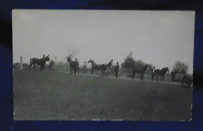Unposted Postcard  - Mules - Draft Horses - Azo Stamp Box 1904-1918