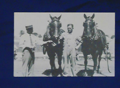 Reproduction Early 1900's Postcard By Hook's - Indiana State Fair Draft Horses