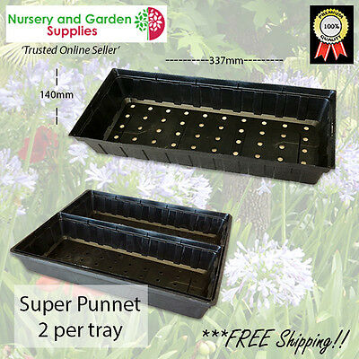 Super Punnet - various pack sizes - Grow seedlings, Potted colour, Herbs, etc.