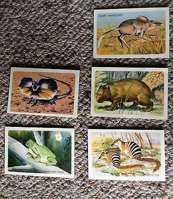 Discover Australia with Shell - vintage collector cards Australian Animals x 5