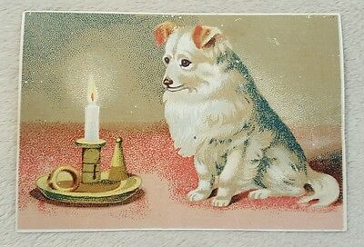 """Antique Victorian Trade Card """"Anchor Coffee"""" advertising white dog Toledo, OH"""