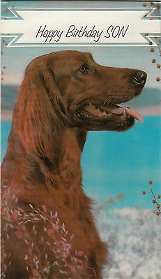 Happy Birthday Son Vintage 1970's Irish Setter Greeting Card