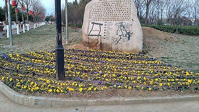 MY HOMETOWN,park yellow flowers stone tablet $0.01  SHPPING FREE