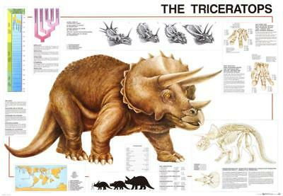 Dinosaurs Triceratops Poster 98 x 68cm Wall Decor Home Bedroom LivingRoom