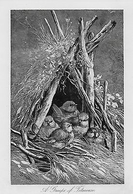 TITMOUSE Bird Family Babies NESTING Birdhouse Home Antique 1893 MATTED Picture