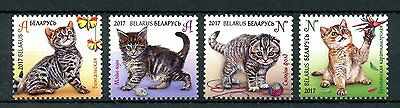 Belarus 2017 MNH Kittens 4v Set Cats Pets Domestic Animals Stamps