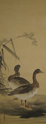 Antikes Japanisches Rollbild Kakejiku Zwei Enten Japan Scroll 3493