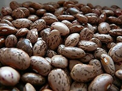 LIMA BEAN 50 Count HENDERSON BUSH Bean seeds Combined S/&H