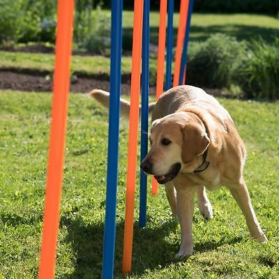 Dog Weave Poles Fun And Sport Agility Training Obedience Fitness Healthy