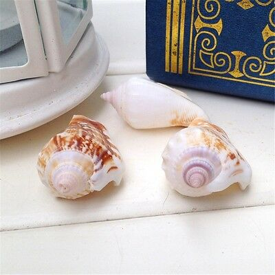 Pack 10 Seashells 3cm - 6cm Sea Shells Strombus Conch DIY Crafts Decor