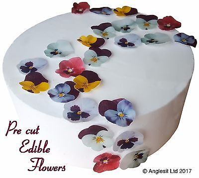 Pre-Cut Pansies Edible Flowers Wafer Paper Cup Cake Toppers Decorations