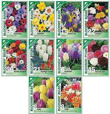 FLOWER BULBS VALUE PACK - Ranunculus, Tulip, Hyacinth, Heritage Combo, Freesia