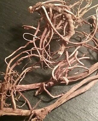 2 OUNCE DRY MAYAPPLE ROOTS - Whole Root Botanical