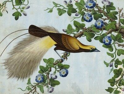 Antique 19th-century Chinese Painting on Pith - Lesser Bird of Paradise