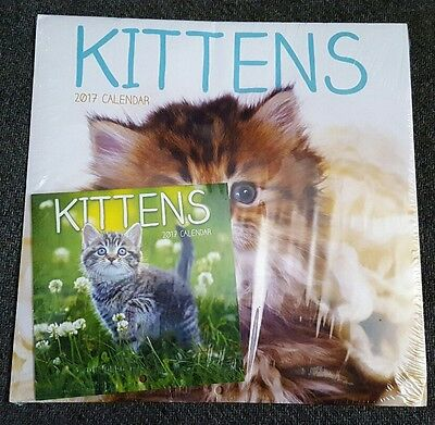 2017 Kittens Wall Calendar Full Size and Small Size 2 Pack Desk Cat Lovers