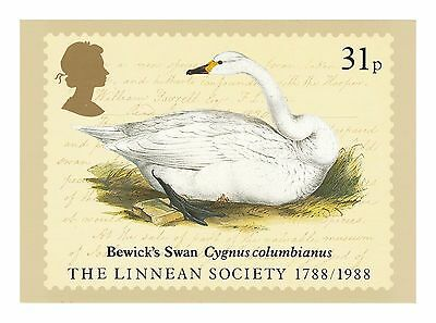Bewick'S Swan Cygnus Columbianus - Linnean Society Series Phq 107 Royal Mail Pc